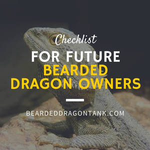 bearded dragon info
