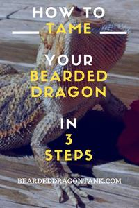 How To Tame Your Bearded Dragon
