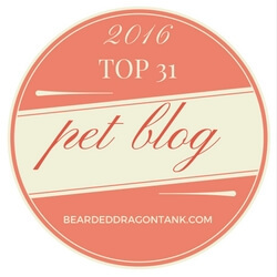 TOP 31 PET BLOG