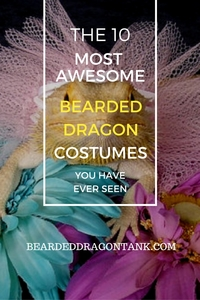 Bearded Dragon Costumes