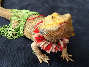 bearded-dragon-hawaii-costume