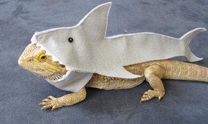 shark-costume-for-bearded-dragons