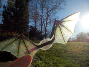 translucent-fantasy-wings-dragon-in-valley