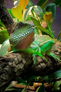 How To Care For Chinese Water Dragons