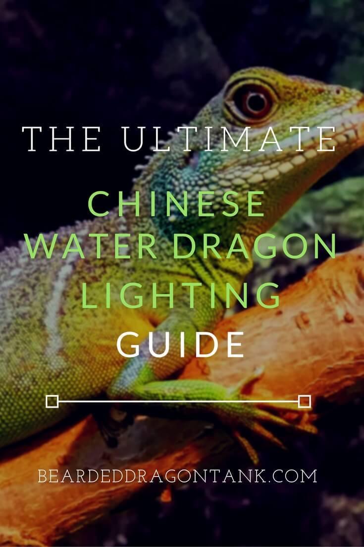 Chinese Water Dragon Lighting