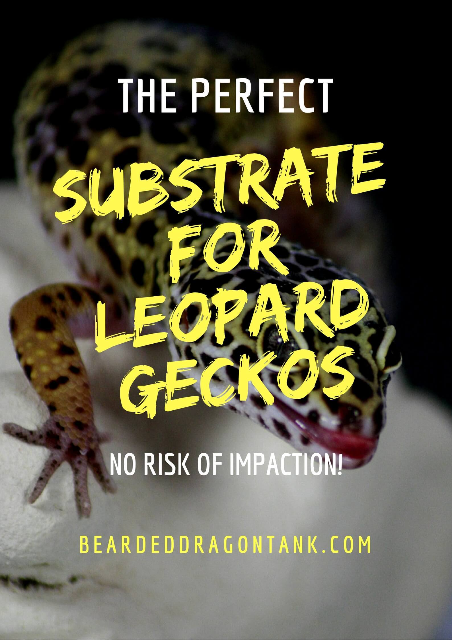 The Best Leopard Gecko Substrate