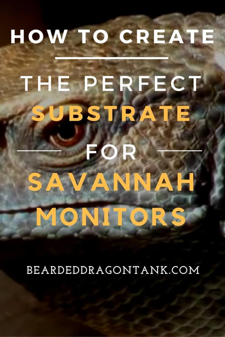 savannah monitor substrate