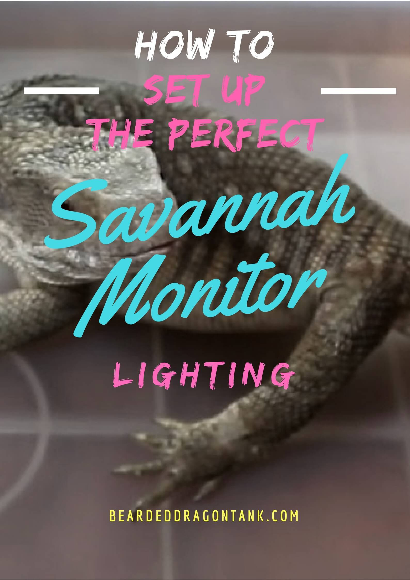 Savannah Monitor Lighting