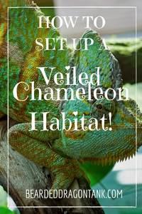 Veiled Chameleon Tank