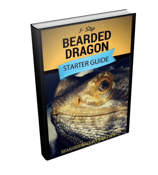 5-Step Bearded Dragon Starter Guide