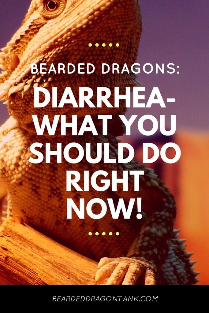 BEARDED DRAGONS DIARRHEA