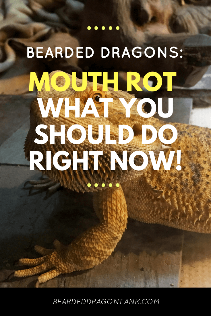 Mouth Rot In Bearded Dragons