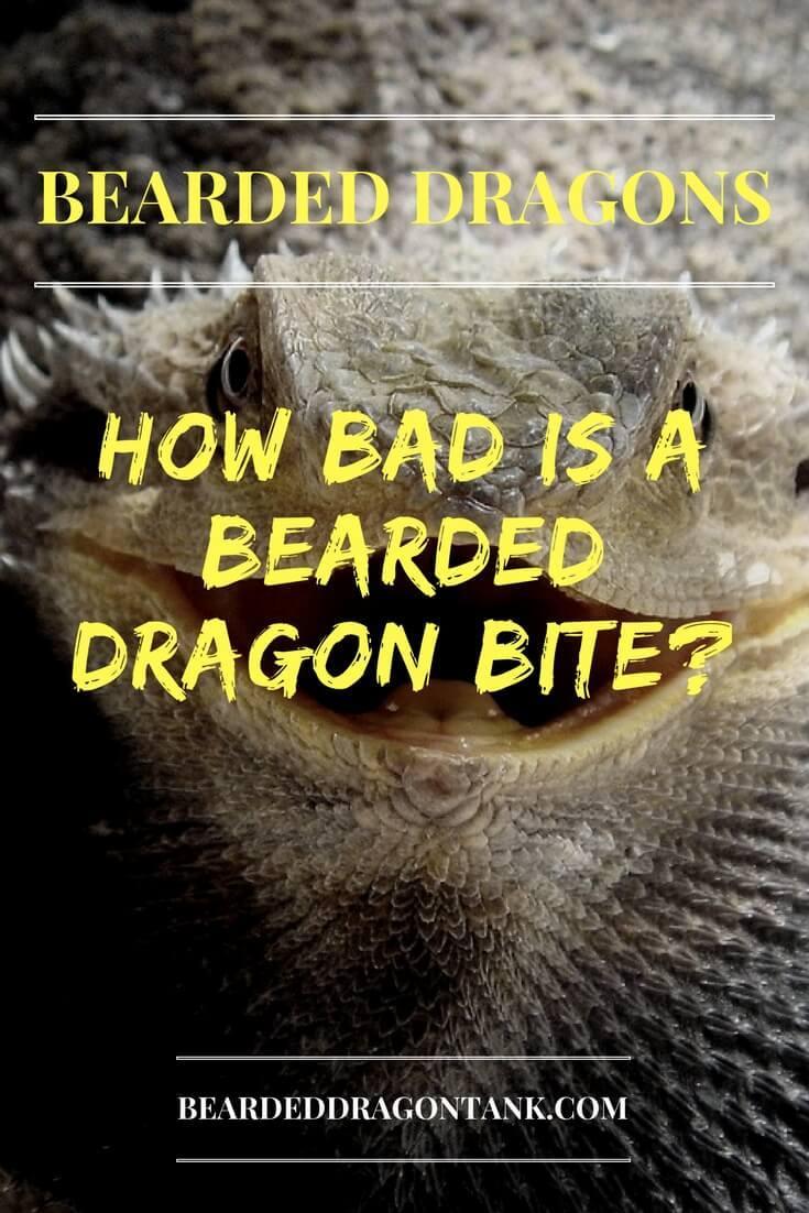 Do Bearded Dragons Bite?
