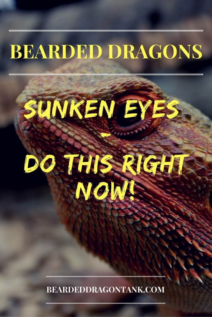 Bearded Dragon Sunken Eyes