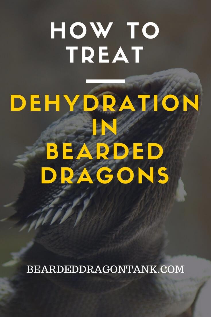 Bearded Dragon Dehydration