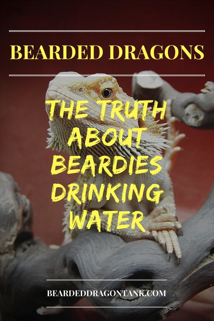 Bearded Dragon Water