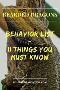 Bearded Dragon Behavior List