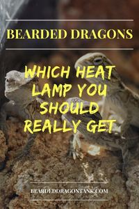 Bearded Dragon Heat Lamp