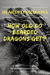 Bearded Dragon Lifespan