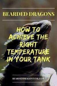 Bearded Dragon Temperature