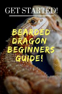 Beardie Beginner