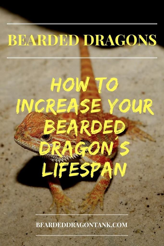 How old do bearded dragons get