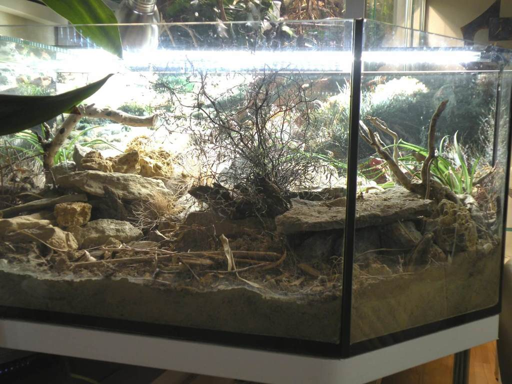 Should You Really Use A Leopard Gecko Heat Pad Bearded Dragon Tank
