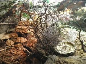 Natural Leo Habitat