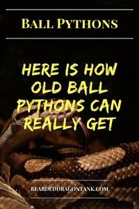 How Long Do Ball Pythons Live