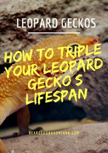 How Old Do Leopard Geckos Get