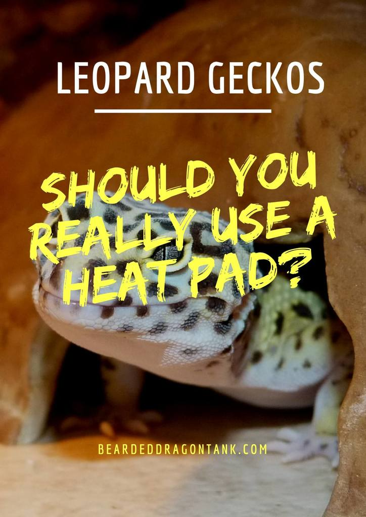 Can I Feed My Leopard Gecko Bearded Dragon Food