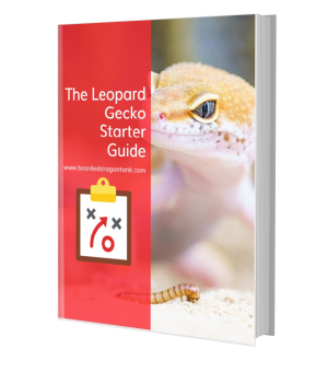 Caring For A Leopard Gecko
