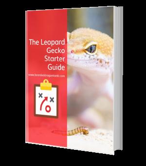 Leopard Gecko Starter Guide