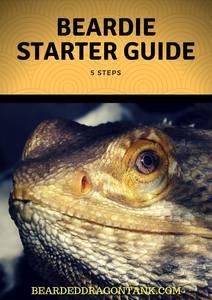 5-Step Bearded Dragon Starter Guide