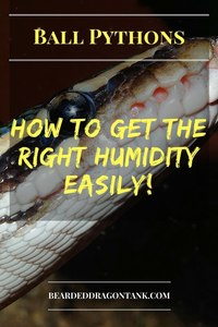 Ball Python Humidity
