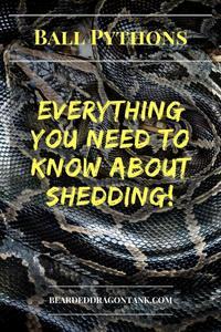 Ball Python Shedding