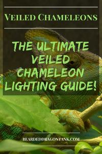 Veiled Chameleon Lighting