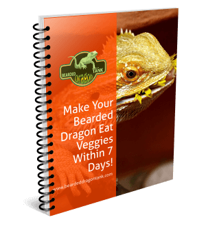 Make Your Bearded Dragon Eat Greens Within One Day