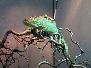 veiled chameleon uvb