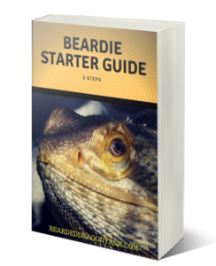 Bearded Dragon Starter Guide