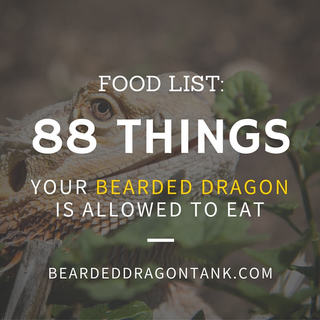 bearded dragon food list