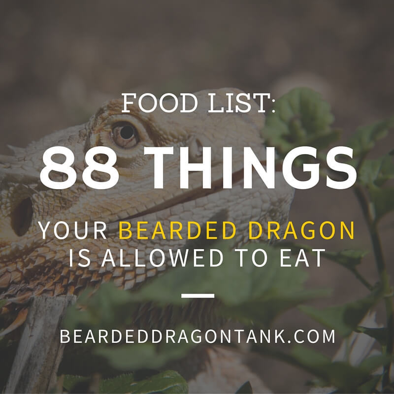 Bearded Dragon Food List 88 Things Your Dragon Is Allowed To Eat