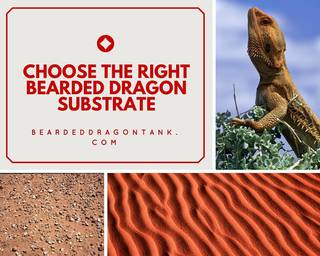 bearded dragon substrate