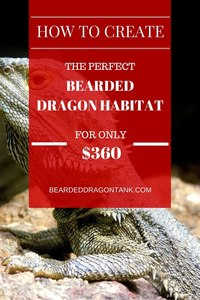 How To Setup a Bearded Dragon Habitat For Only 360