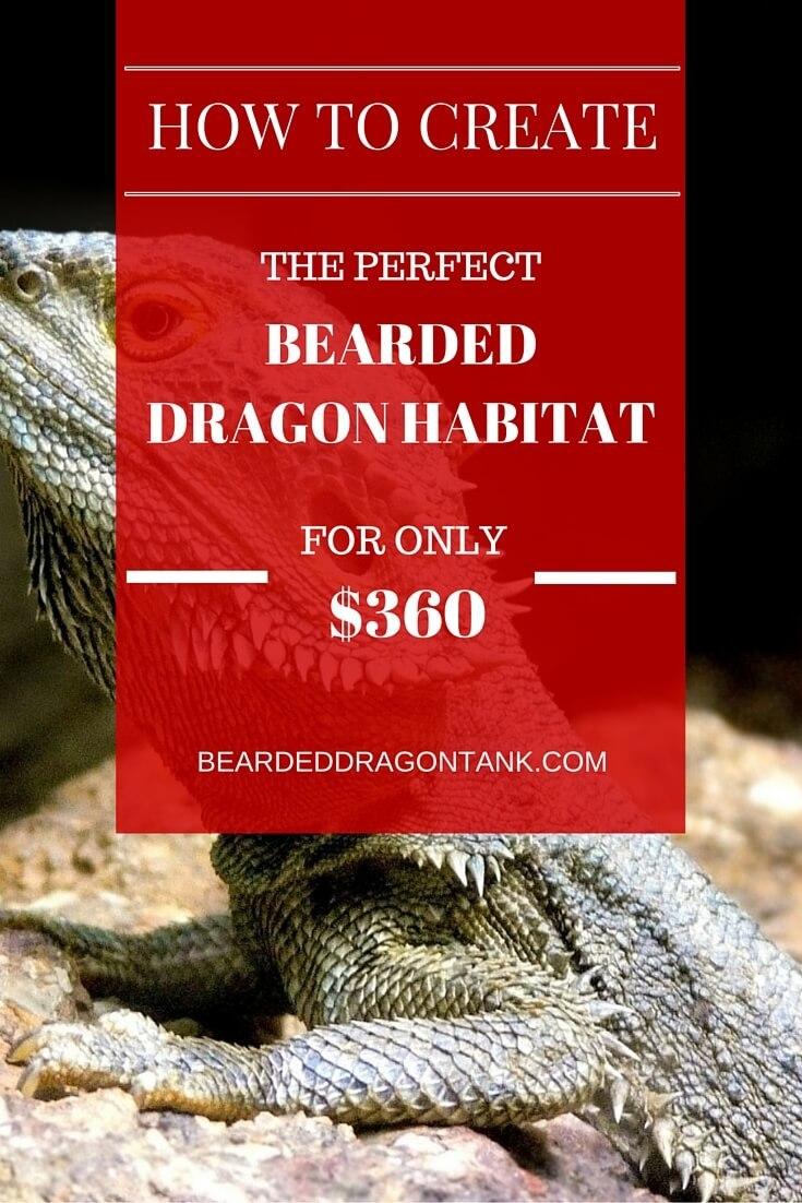 Create A Huge Bearded Dragon Habitat Bearded Dragon Tank