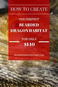 Bearded Dragon Terrarium