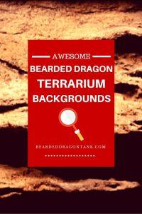 reptile terrarium background