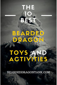 bearded dragon toys