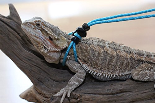 Adjustable Reptile LeashTM Harness