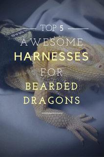 bearded-dragon-harness
